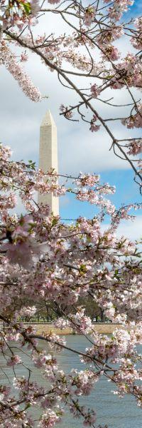 Cherry Monument